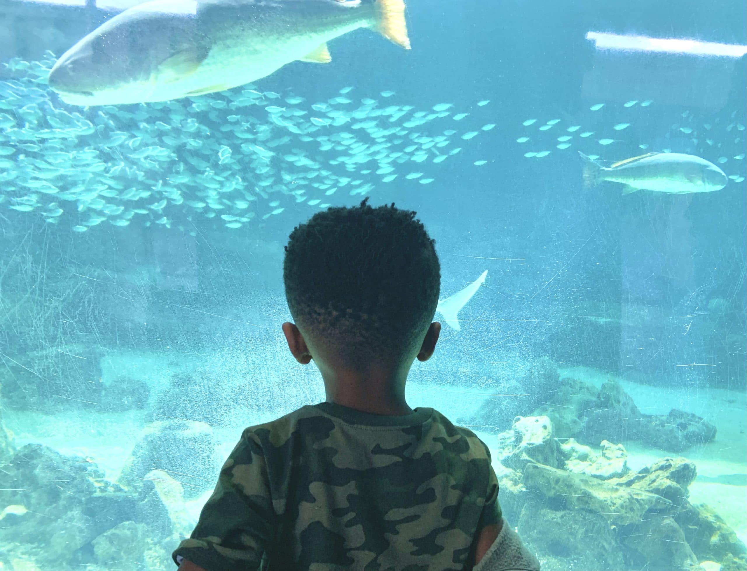 Sarasota with Kids_ Mote Aquarium