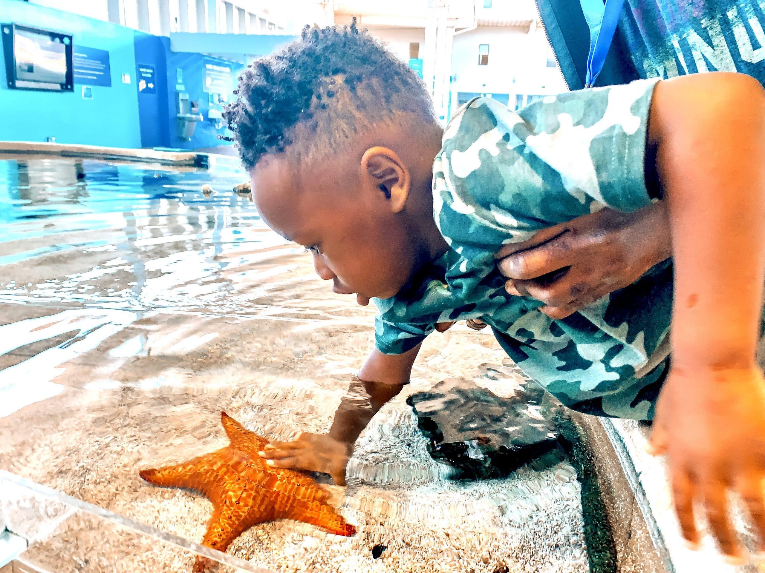 Starfish Mote Aquarium