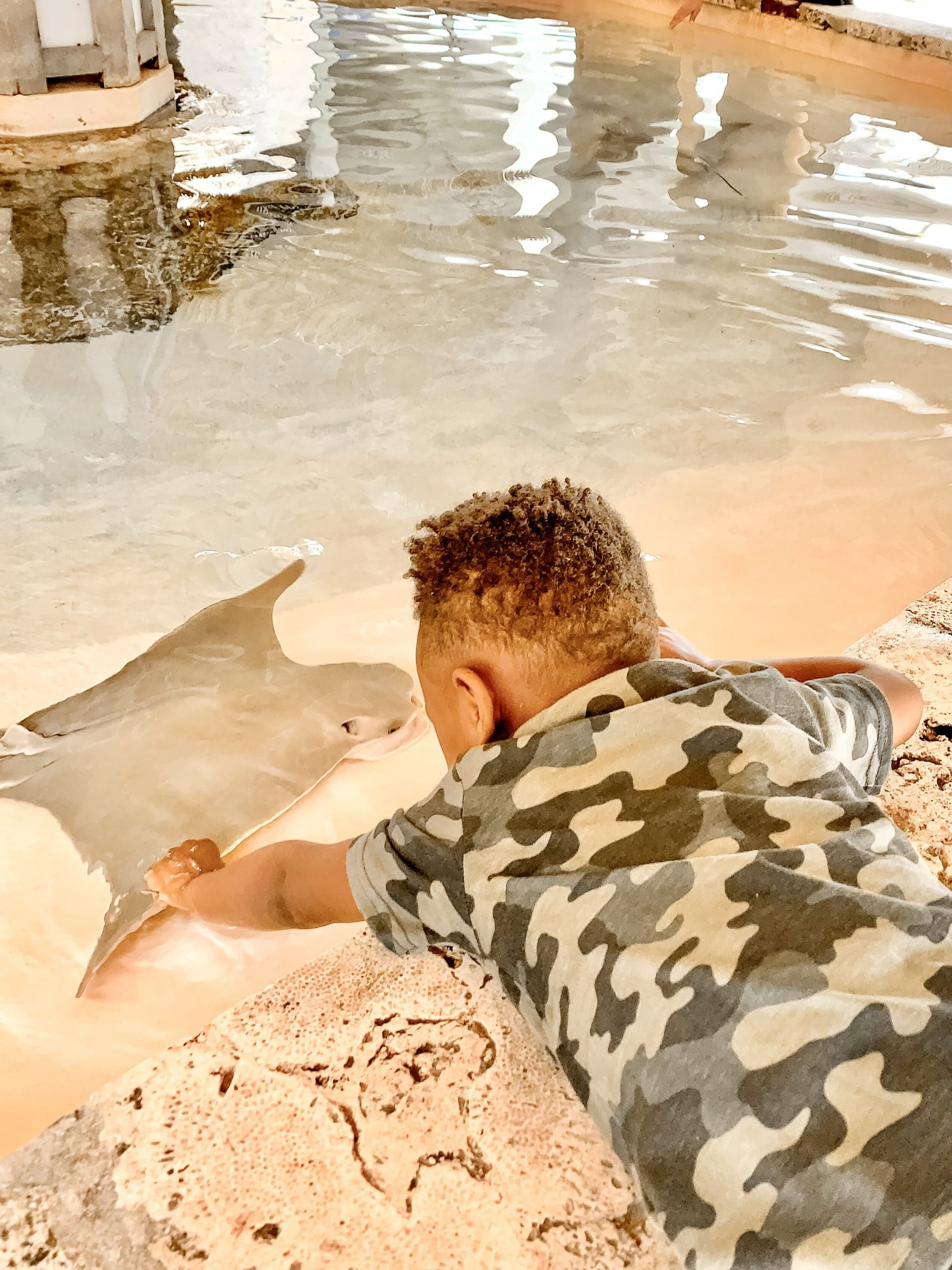 Sarasota with Kids_Mote Aquarium