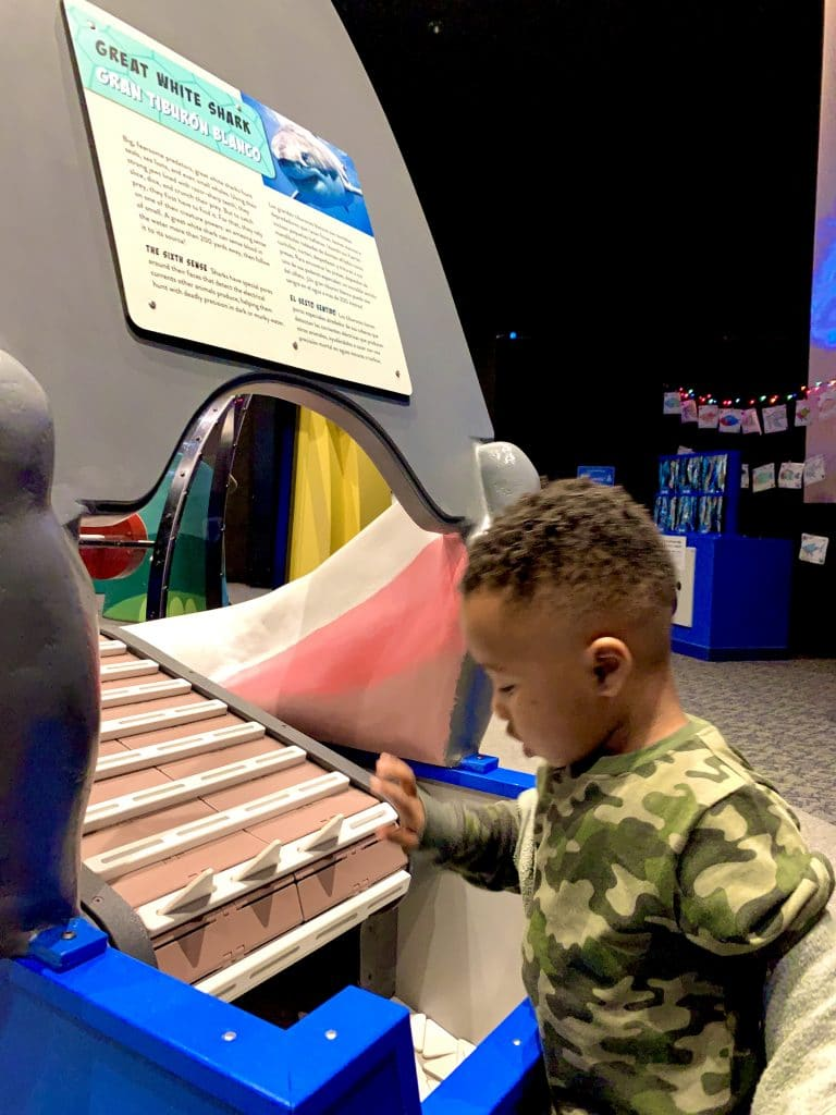 Things to do in Sarasota with Kids_Shark